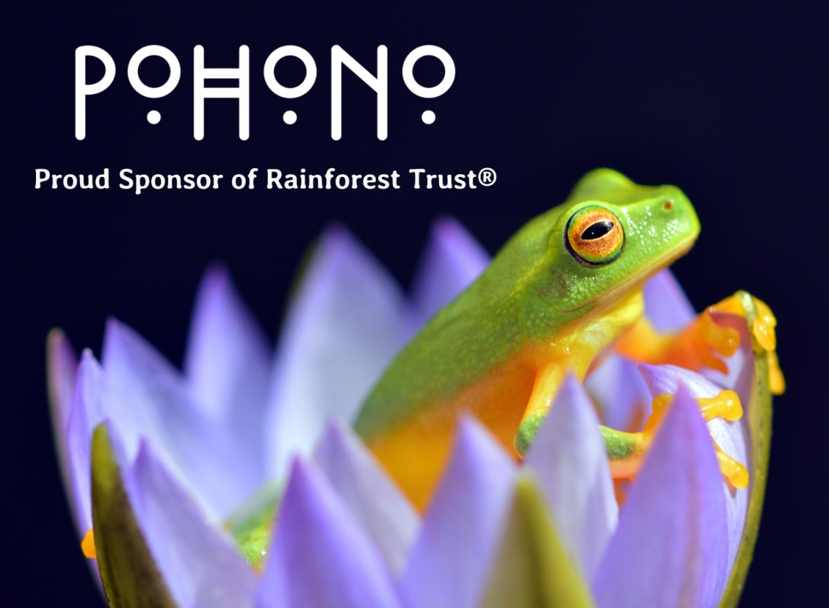 Tree frog overlay for marketing 2